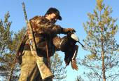 The Capercaillie and Black-cock hunting in Novgorod region