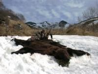 The Kamchatka Brown Bear hunting in Kamchatka