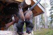 The Capercaillie and Black-cock hunting in Kurgan region